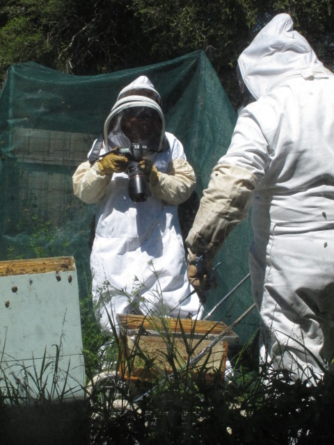 Melbourne, Australia - I'm in the bee suit with the camera, photographing Avi Olshina collecting frames of honey in his backyard hives - photo by Nicki Agron